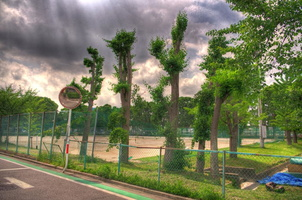 HDR Trees
